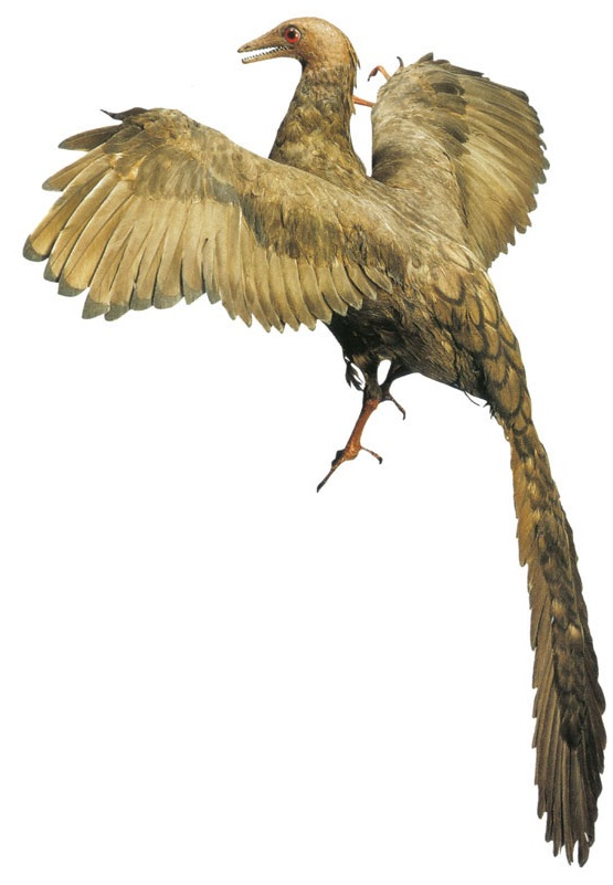 Dinosaurs Evolved Into Birds? | Genesis Park Archaeopteryx Not A Transitional Form