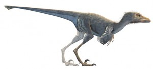 Feathered Dinosaur