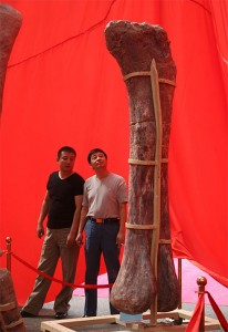 Huge Dino Bone Henan China