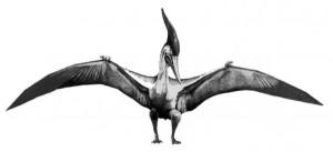 Pterosaur Bipedal