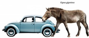 Equus giganteus2