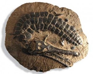 Fossilized croc