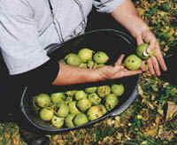 sonic-bloom-walnuts
