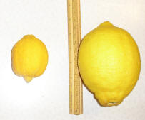 sonic-bloom-lemons