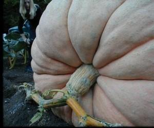 Whittier Pumpkin1