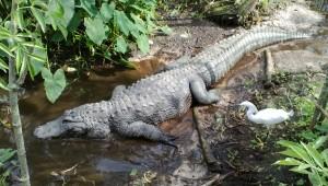 Big Croc & Bird