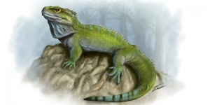 Clevosaurus Image