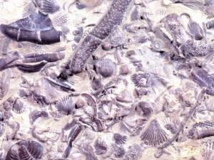 Fossil Graveyard