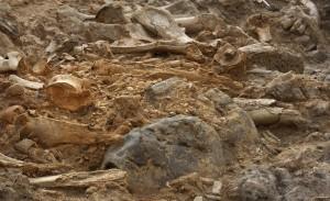 Fossil Graveyard Photo