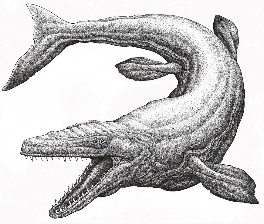 ancient plesiosaur and mosasaur depictions genesis park ancient plesiosaur and mosasaur