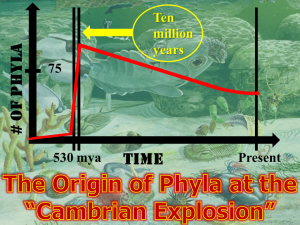 The Cambrian Explosion Graphed
