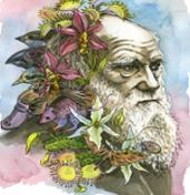 Darwin & Plants