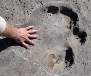 Sauropod Dinosaur footprint