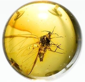 Amber with unknown insect