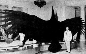 Giant Teratorn Bird