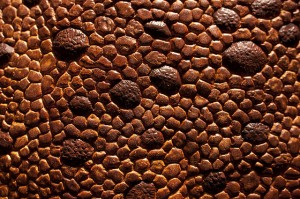 Dino Skin with Great Bumps - CA Museum of Nature