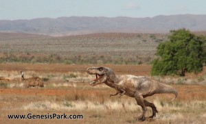 Young Burrunjor Threatens an Emu in the Outback2