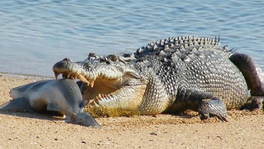 The saltwater crocs genesis park for Types of saltwater fish to eat