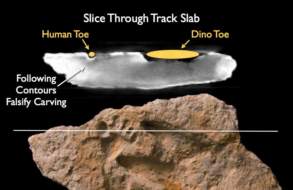 Fossil Footprints | Genesis Park  |Paluxy Evidence